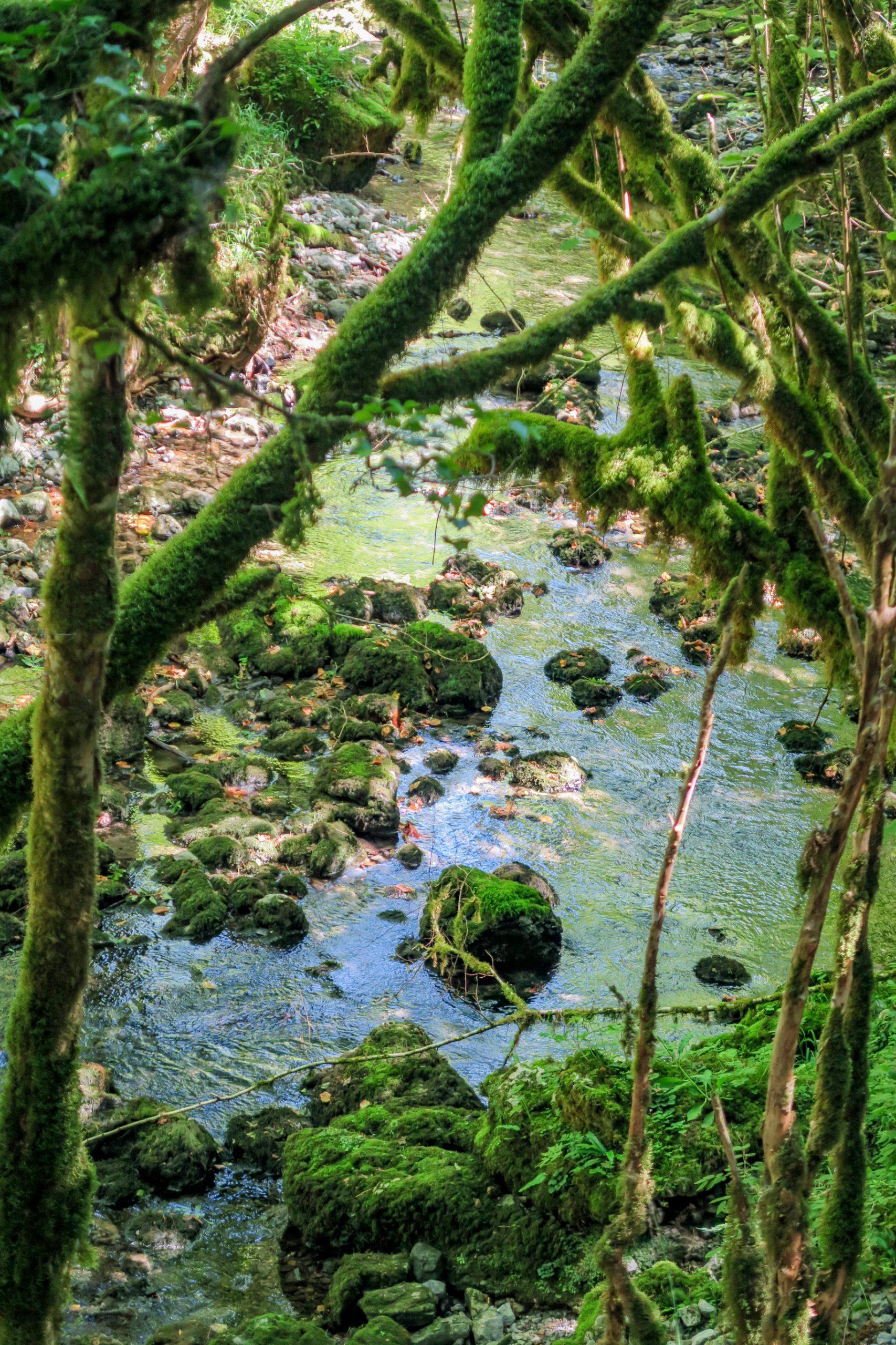 amazonie des hautes pyrénées