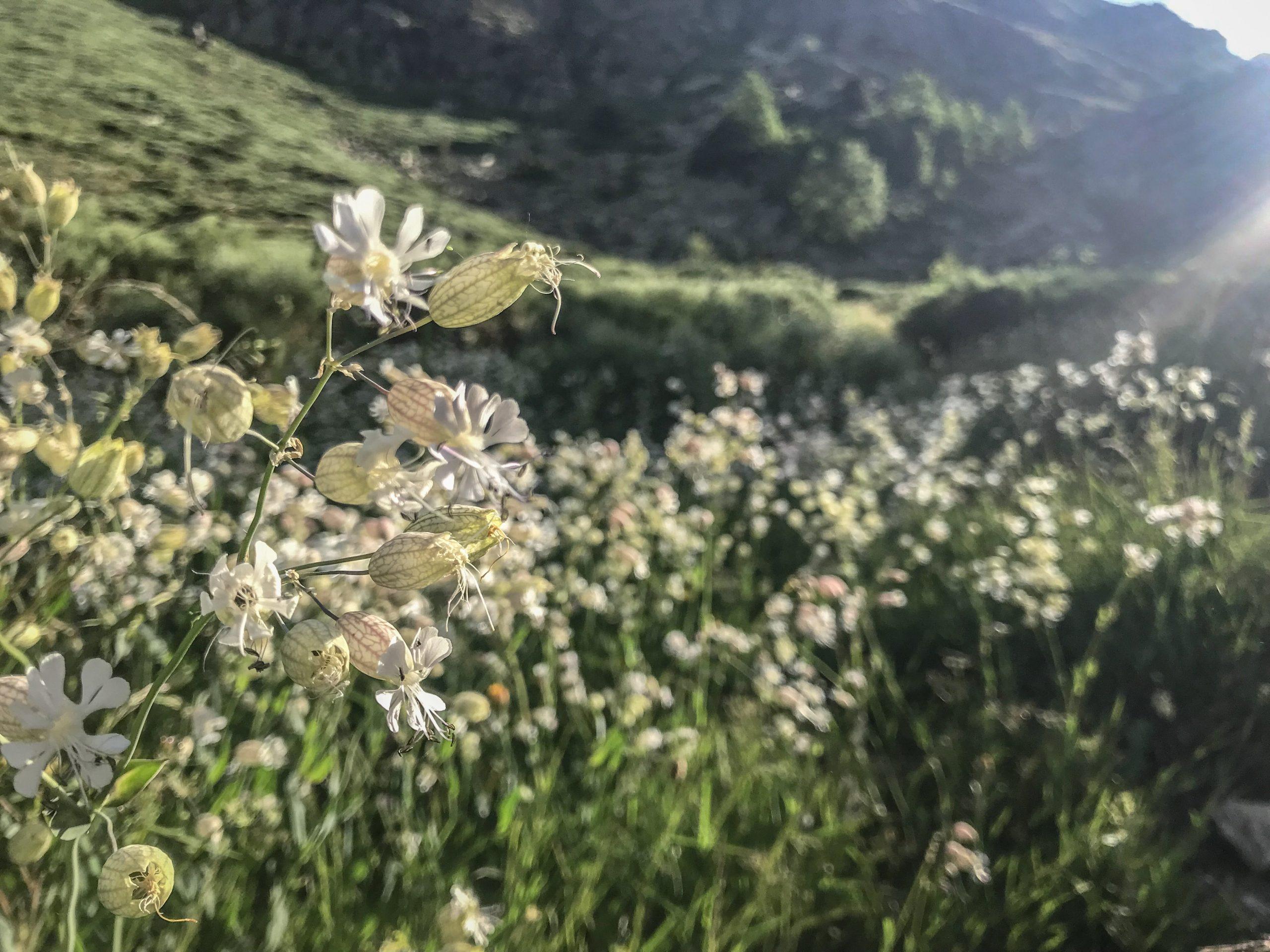fleurs estivales en andorre