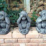 les singes à Phuket