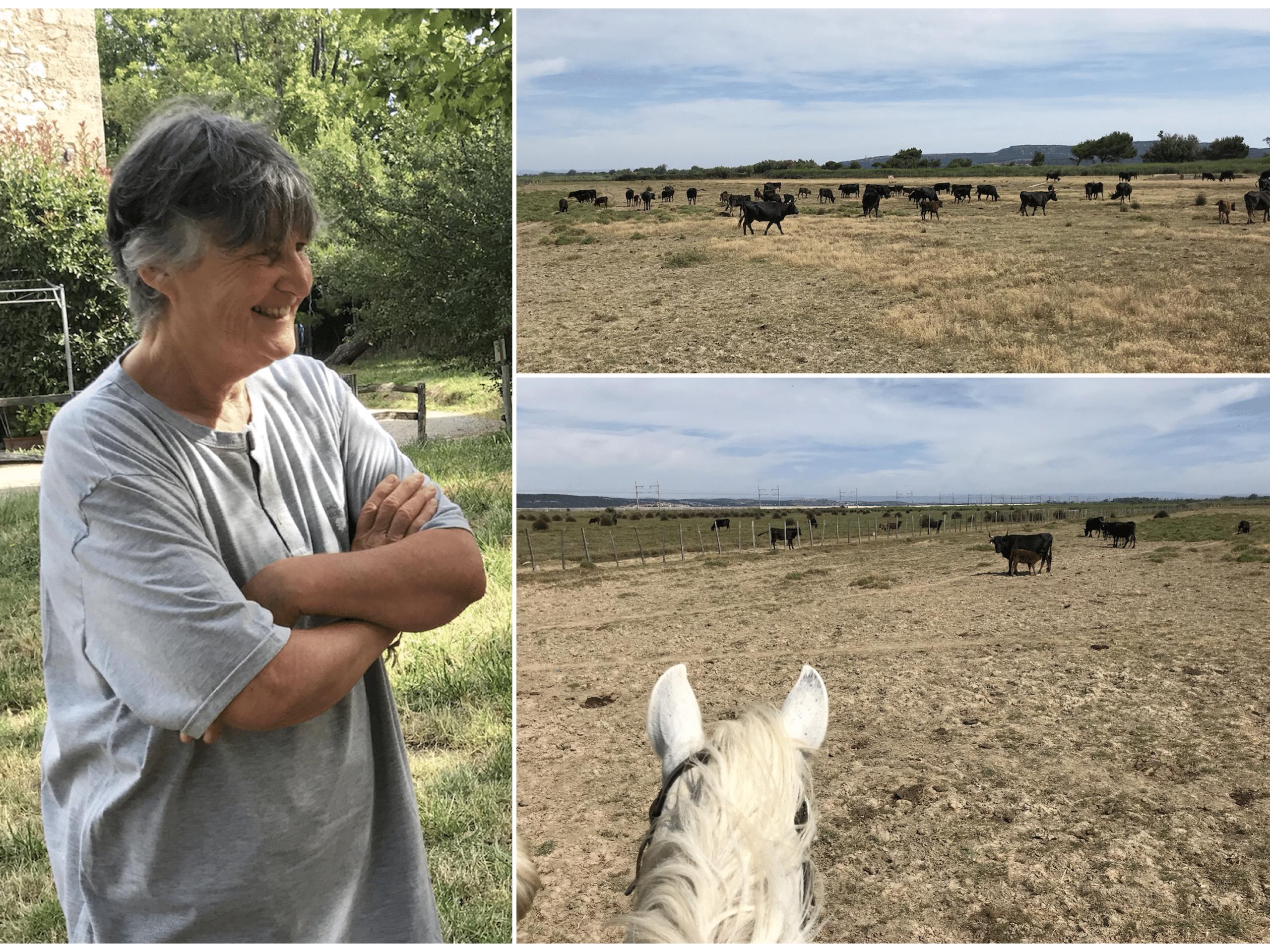 manade tournebelle et son élevage de taureaux aude