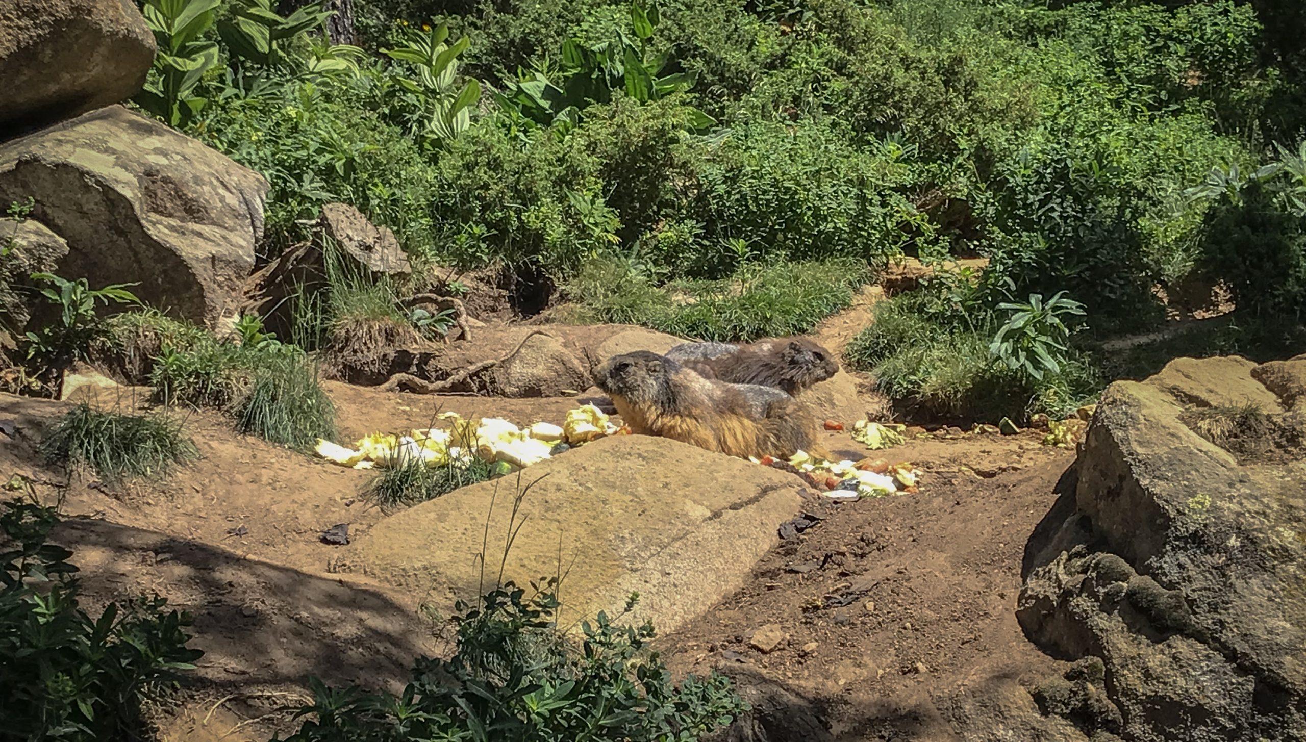 marmottes parc animalier des angles