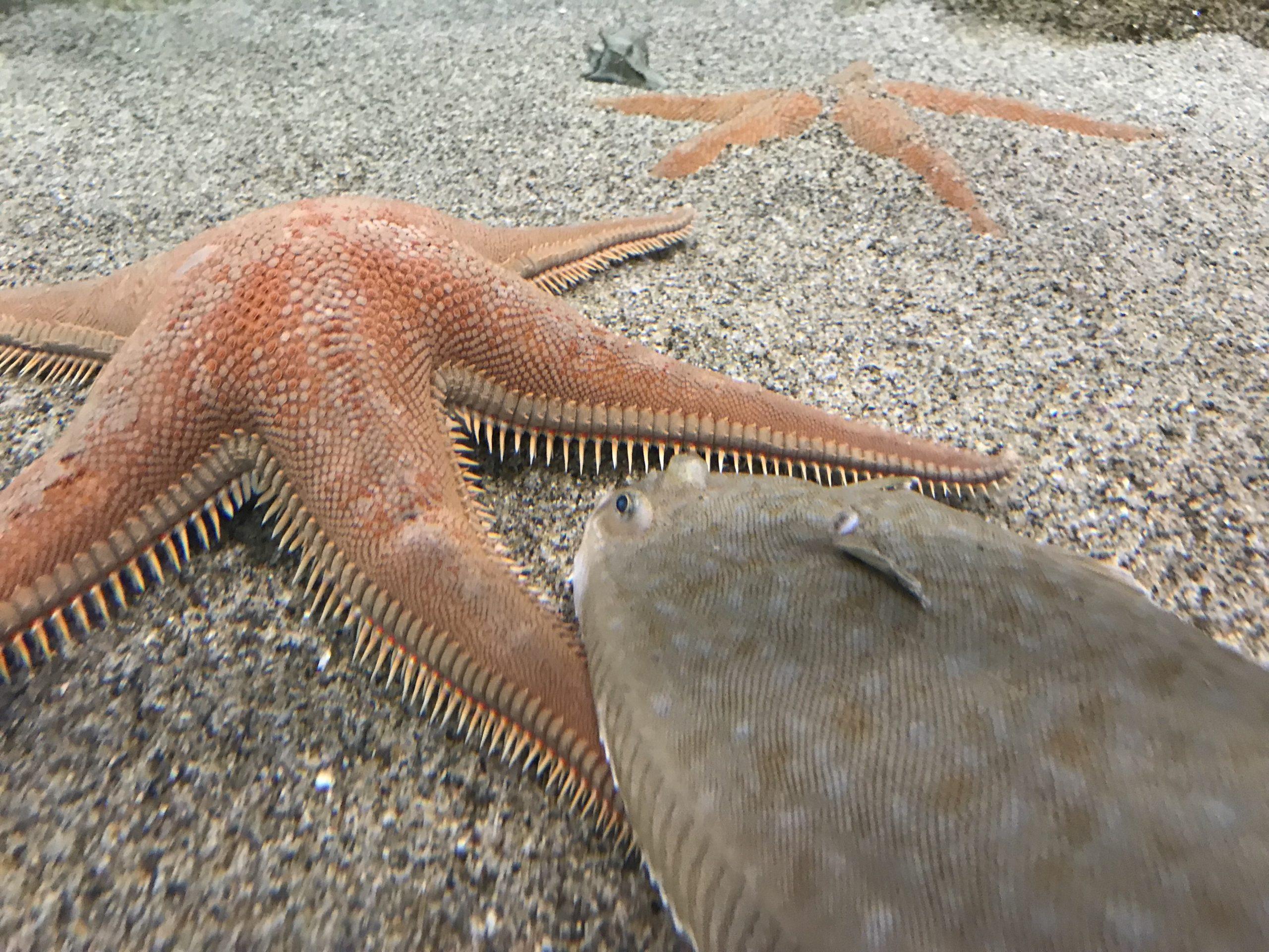 biodiversarium banyuls sur mer