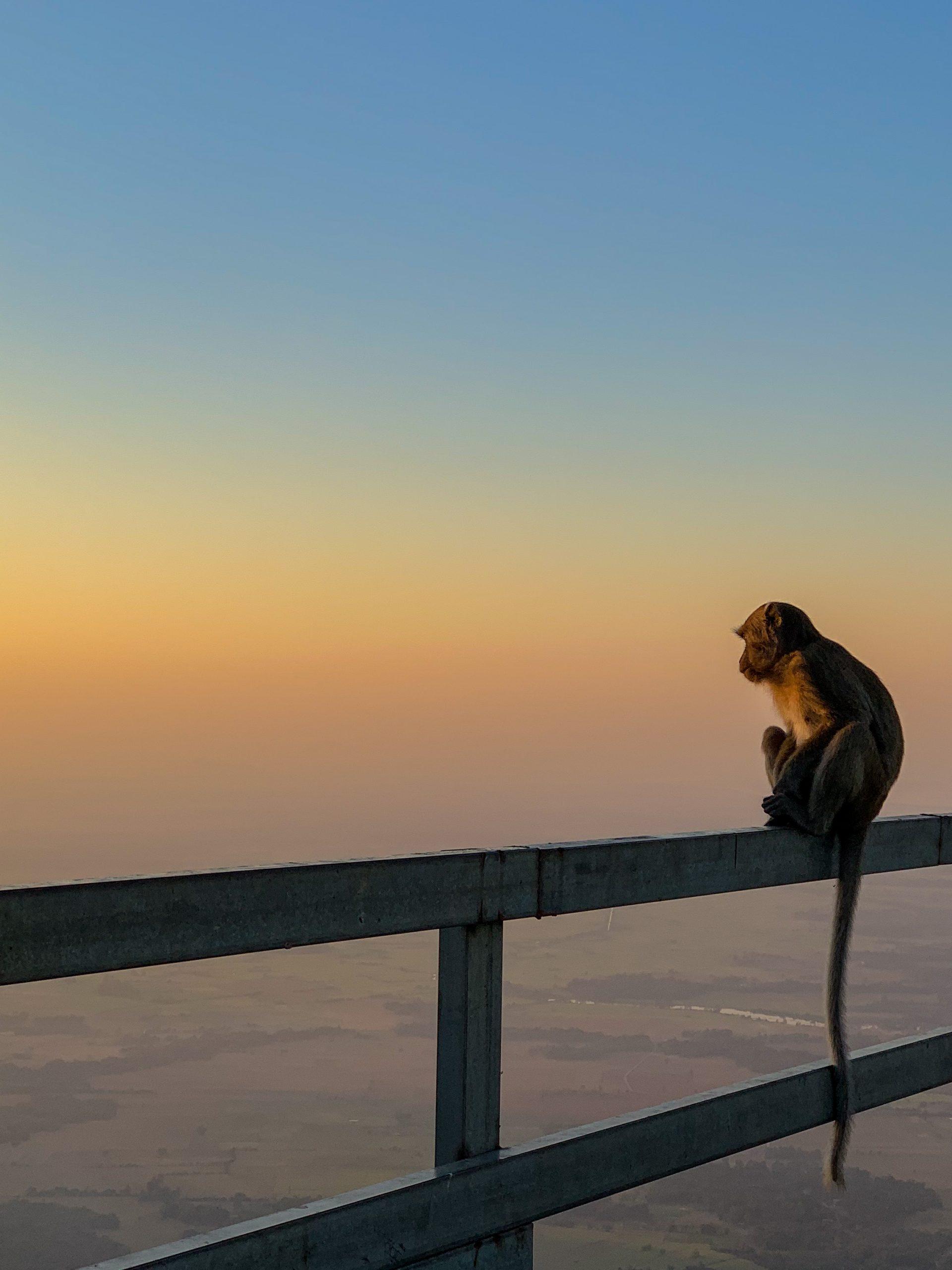 singe au mont zwegabin