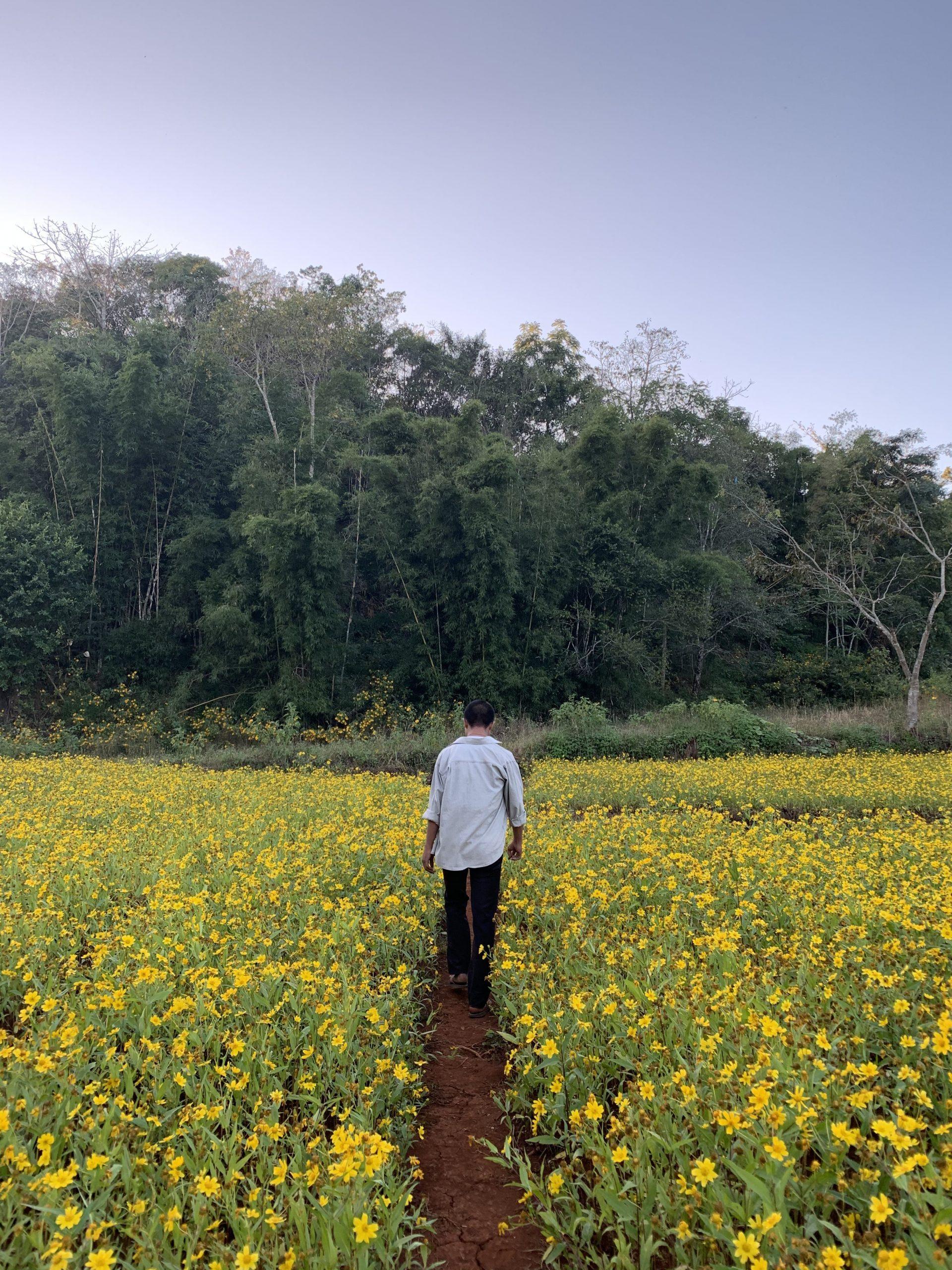 mickael notre guide dans les champs birmans