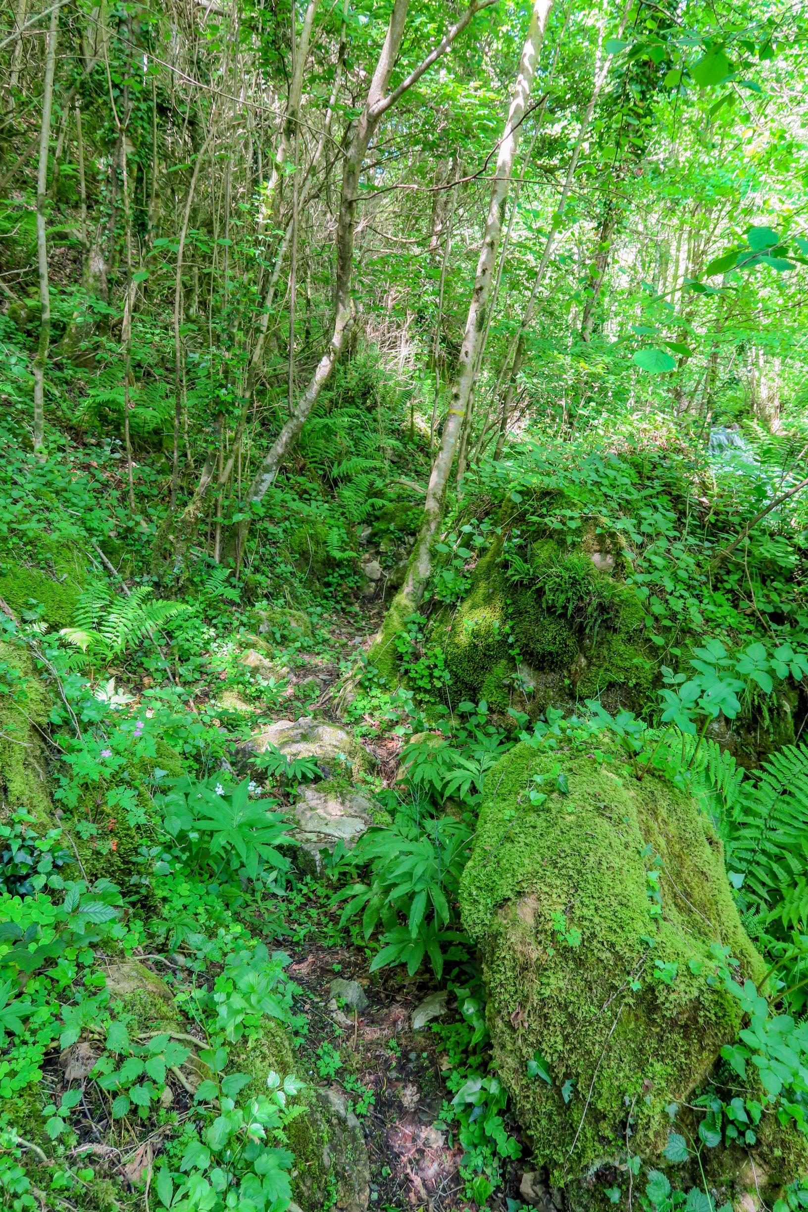 sentier de randonnée prats de mollo haut vallespir