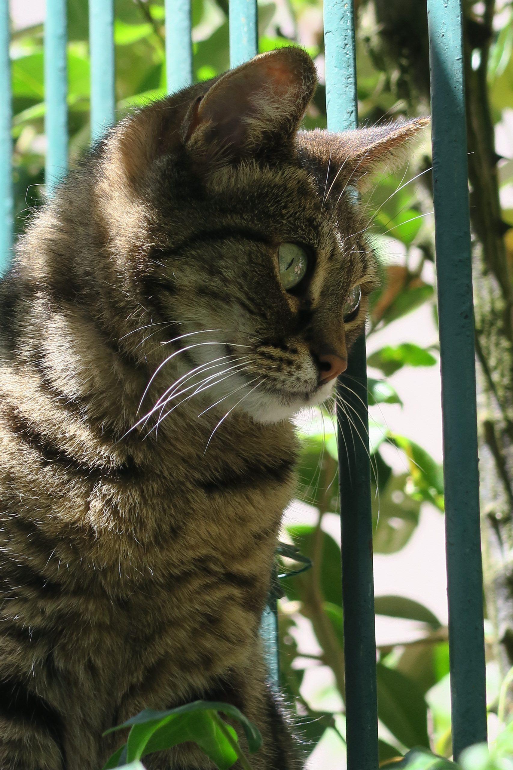 chamallow le chat de montolieu