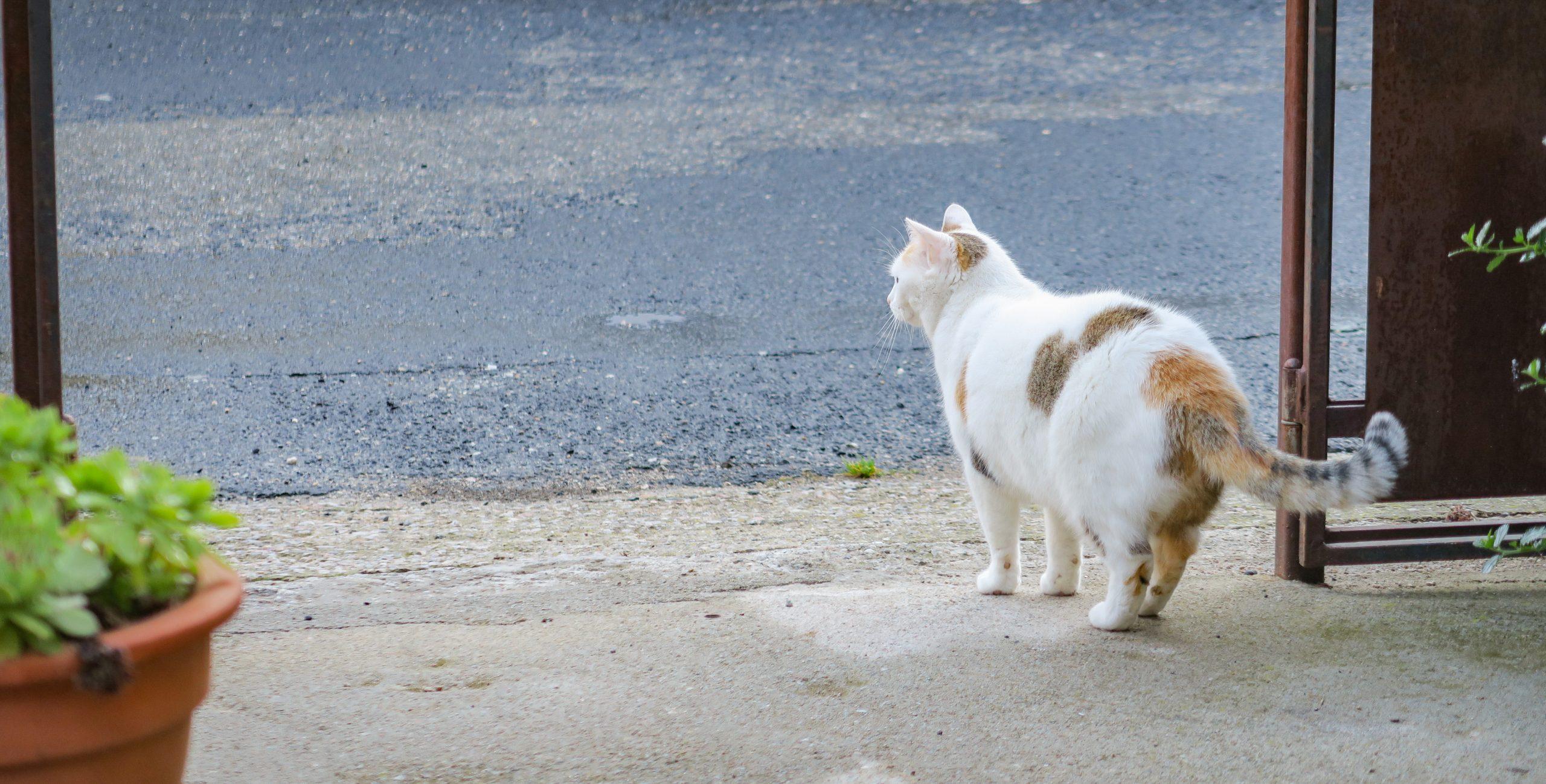 la vie de chat à molitg