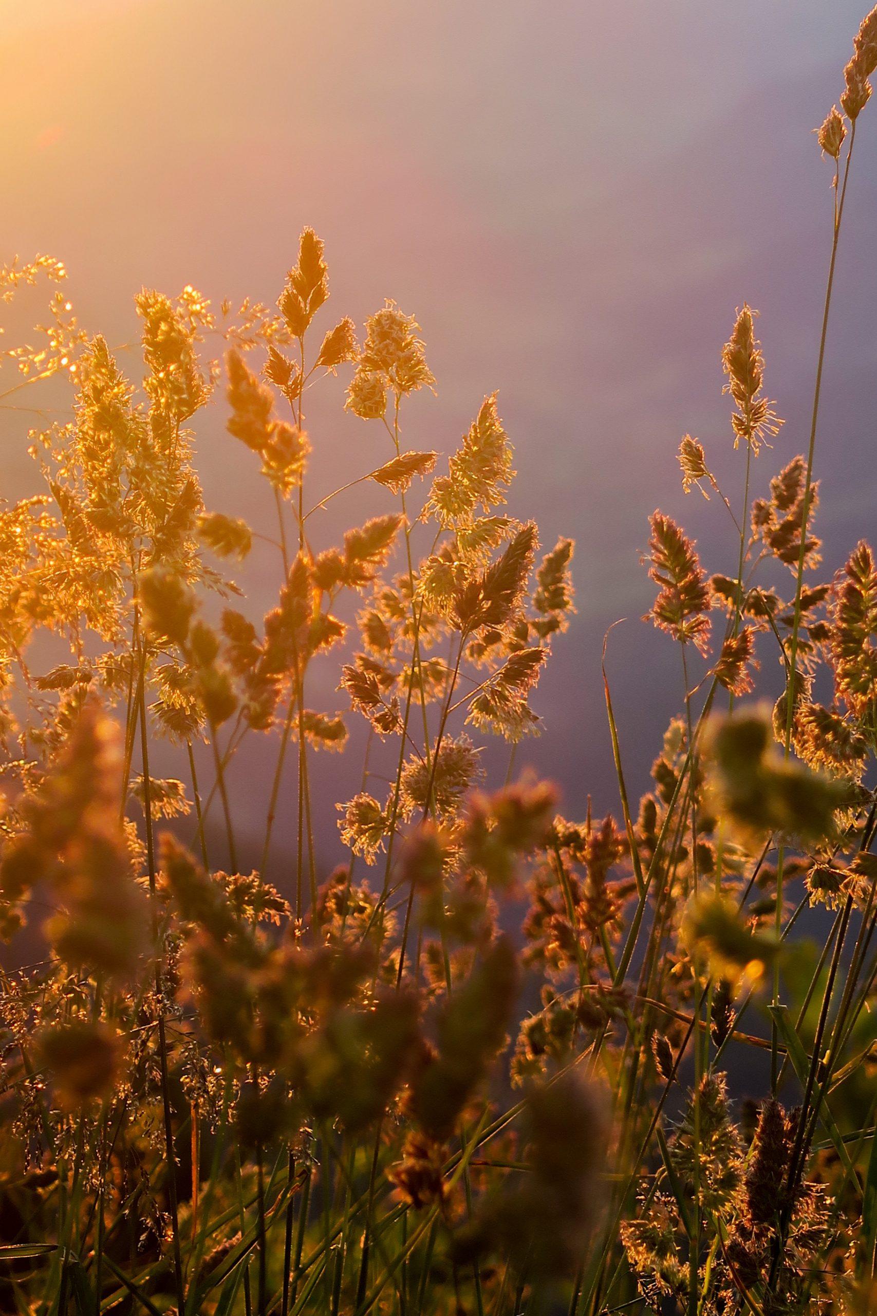 lever de soleil pratz vechin arpettaz