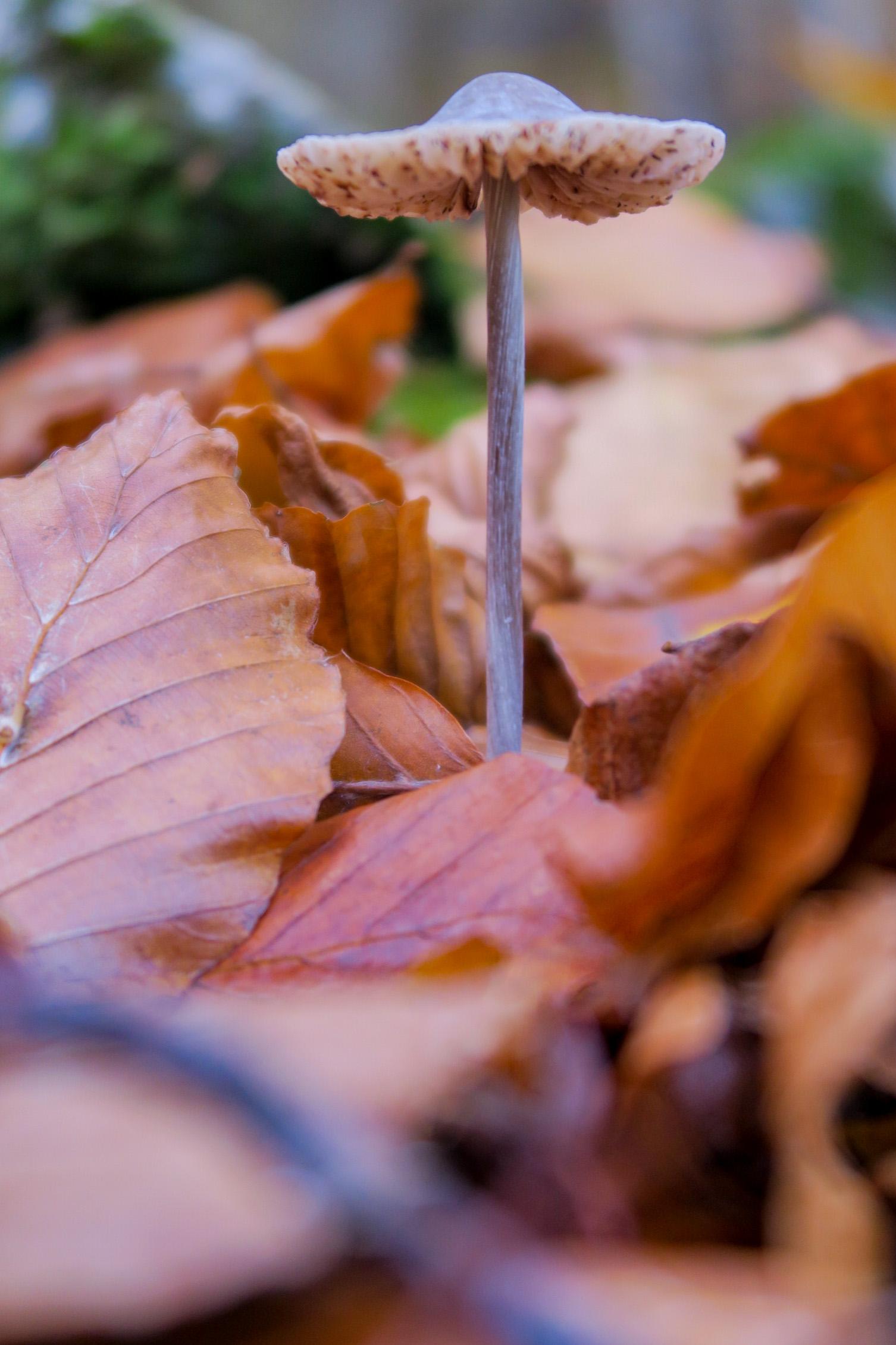 champignon sentier des 5 sens