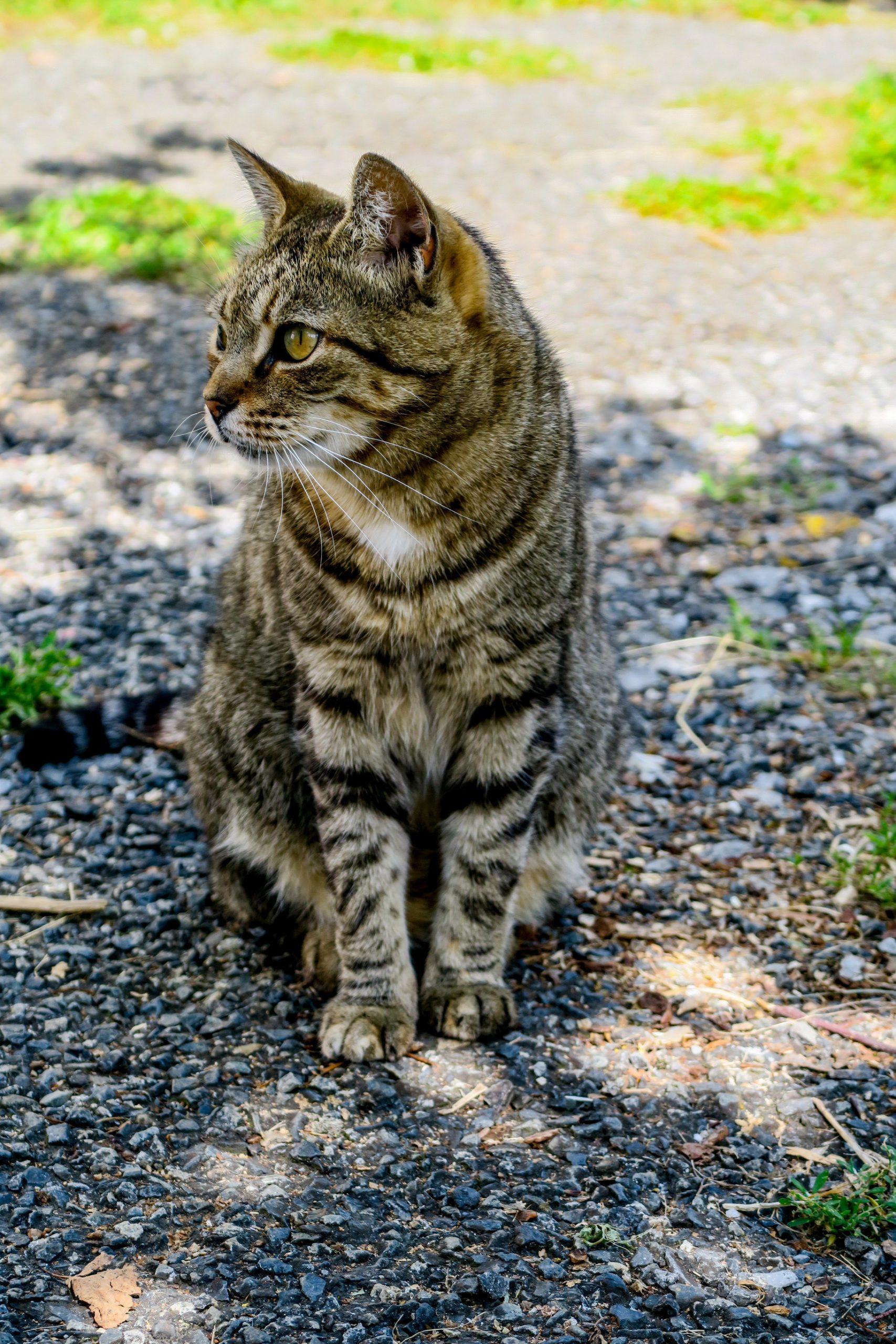 la vie de chat à vizos