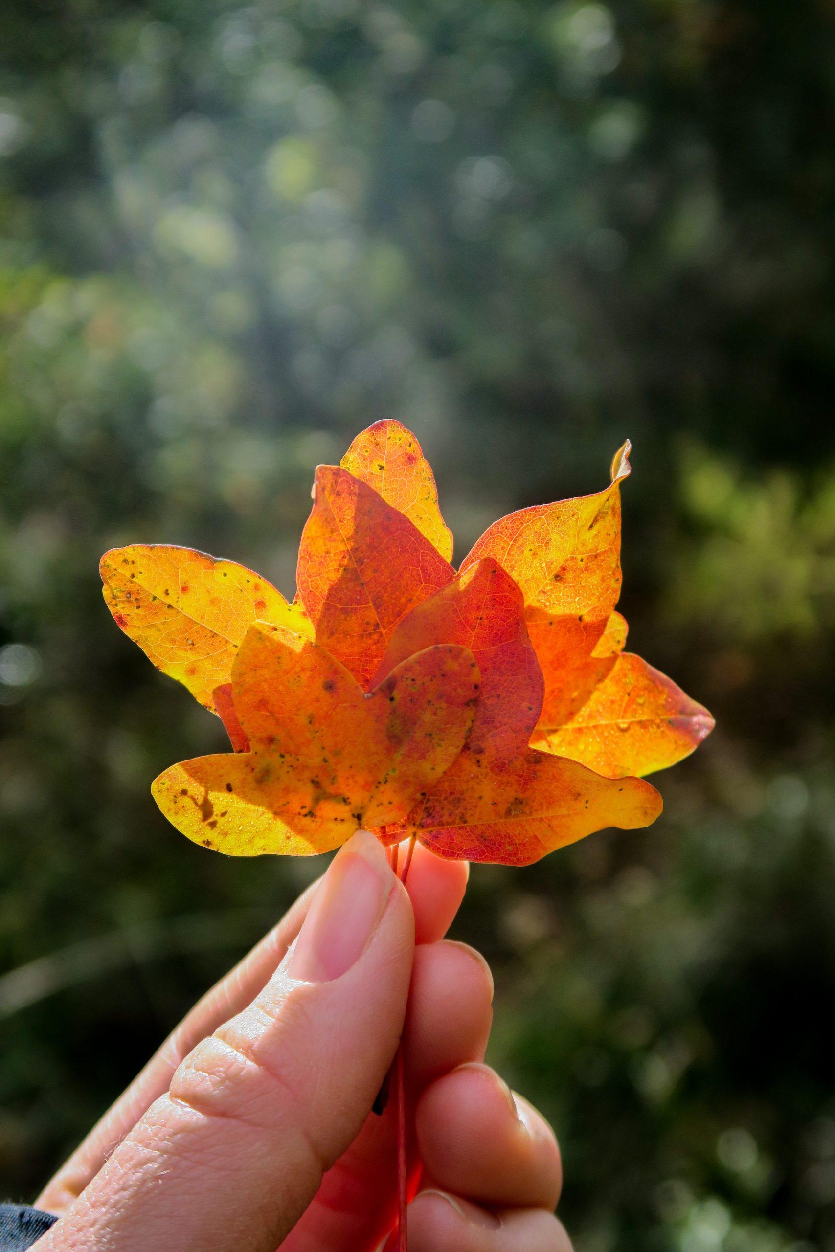 automne conflent