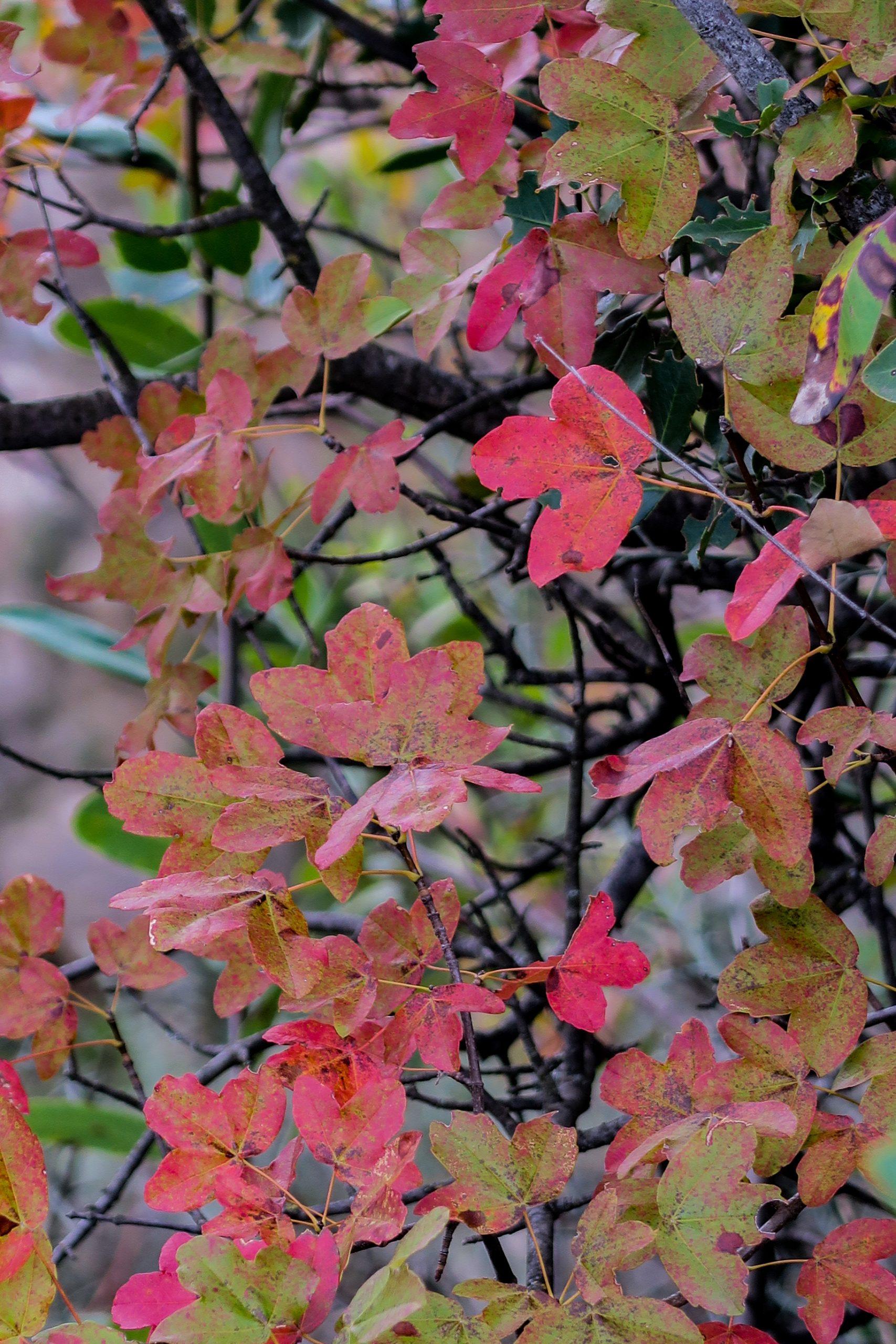 automne en pyrénées orientales