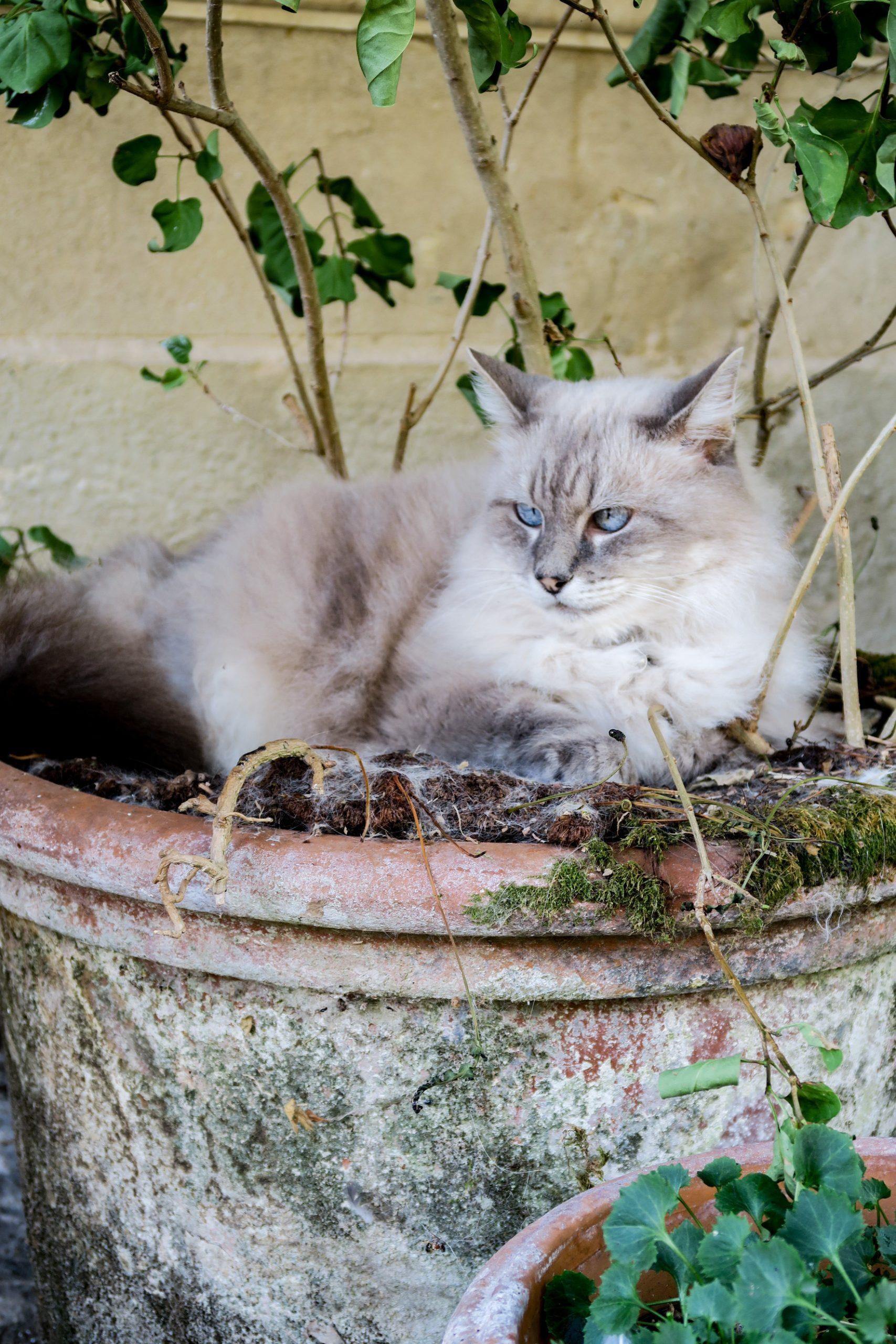 la vie de chat à bruniquel