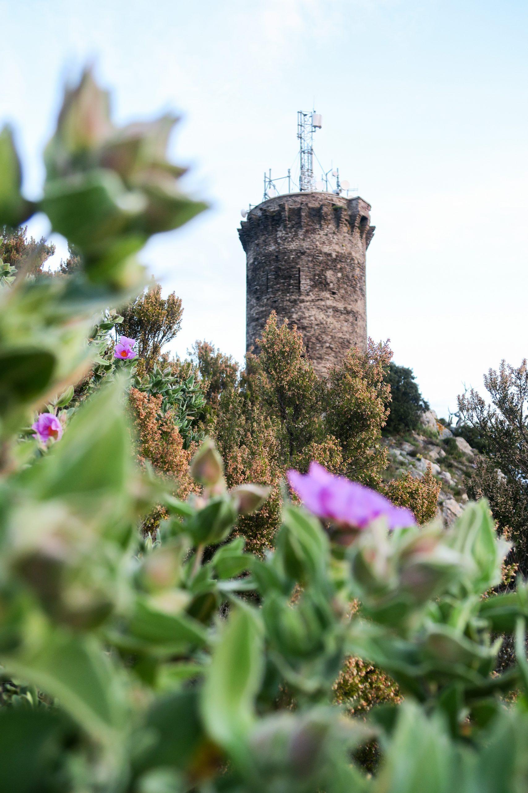 tour de madeloc collioure pyrénées orientales